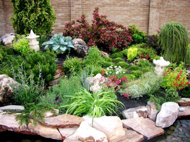 Какие растения используют для рокария