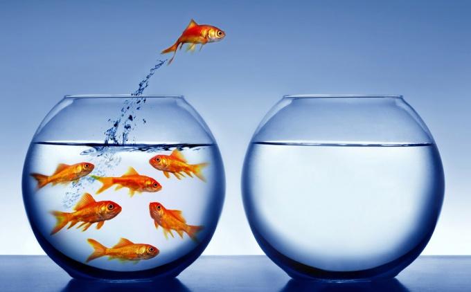 Анализ самообразования и личностный рост
