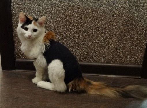 Как стерилизовать кошку