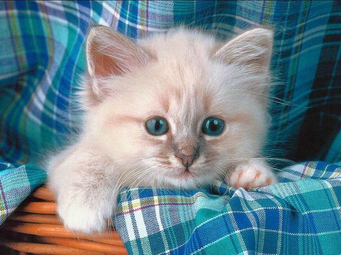 прививки необходимо делать котенку