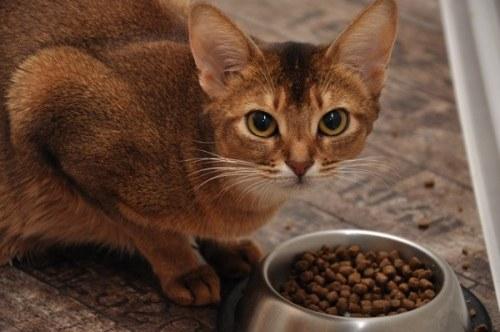 выбрать сухой корм для кошки