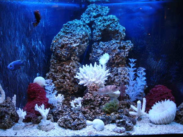 Выбираем аквариум для рыбок