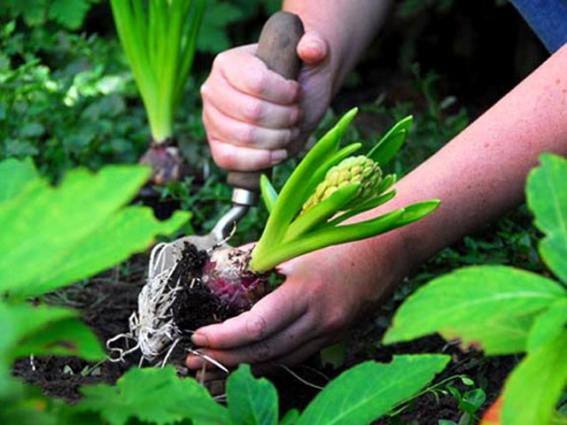 Как правильно выбрать грунт для посадки растений