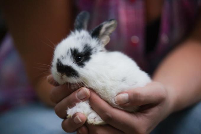 Возьмите крольчонка на руки