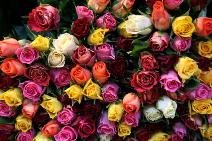 Нужное количество цветов можно подарить в несколько приемов
