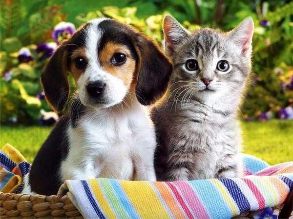 Гостиница для домашних животных: новая услуга