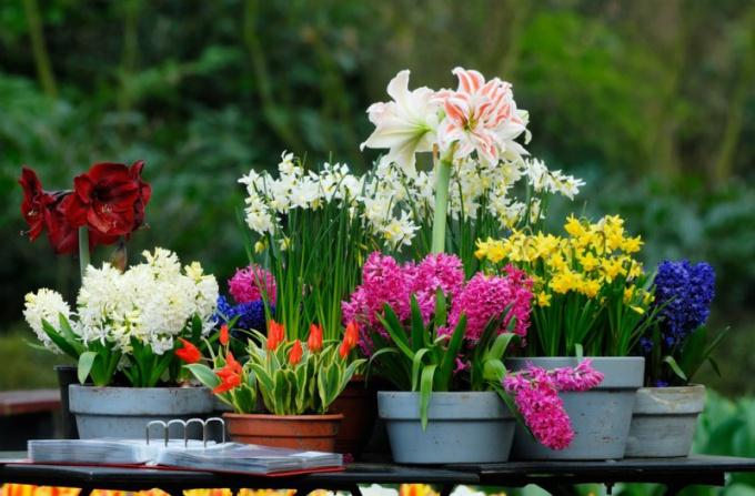 Домашние растения требуют ухода