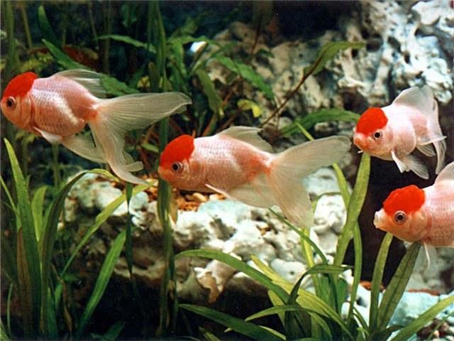 Как предпочесть корм для рыбок