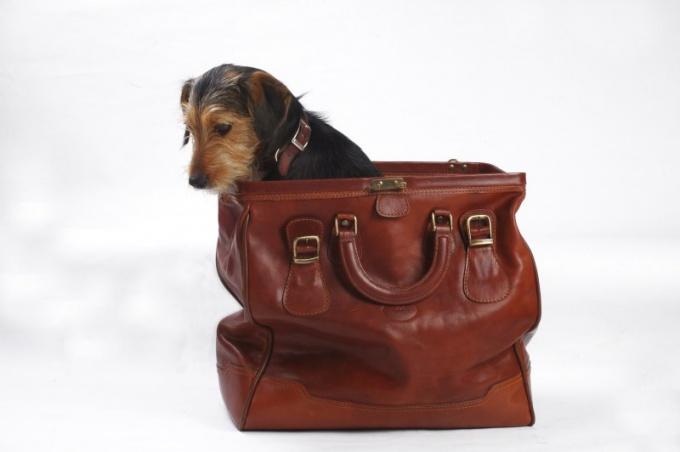 Перевозка мелких животных должна осуществляться в специальной сумке или контейнере!