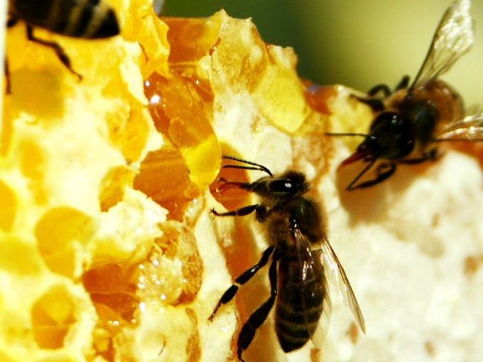 Пчелиные соты: вкусно и полезно