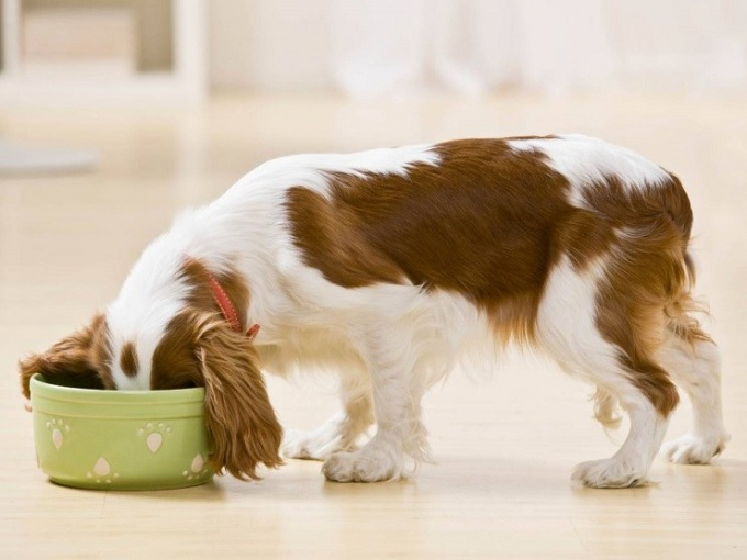 Корм для собак Cesar: преимущества и нюансы выбора
