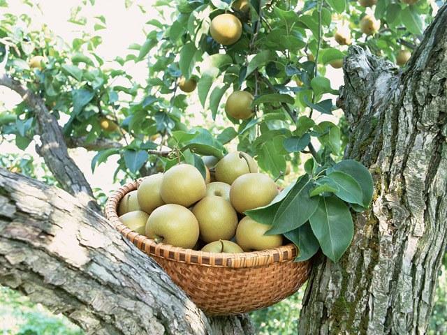 Эффективное и безопасное очищение зелеными яблоками