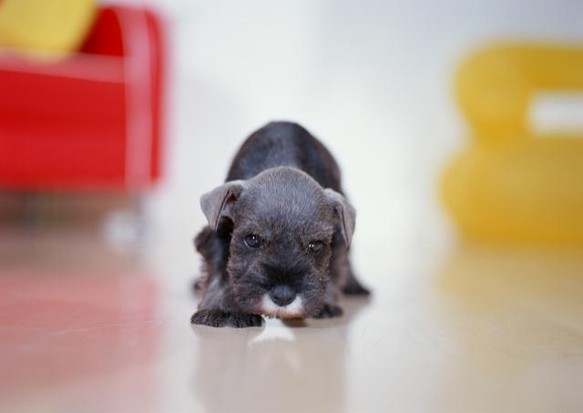 Как приучить собаку к новому дому