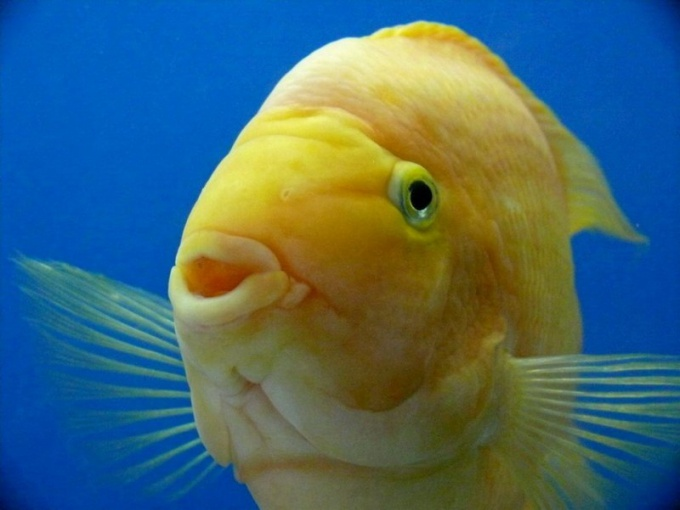 Как рыбы различают запахи