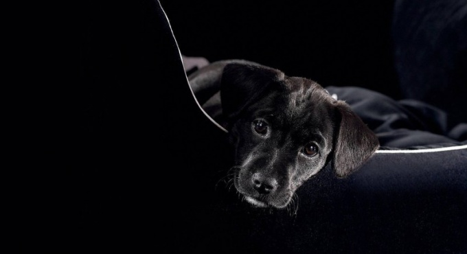 Правила перевозки собак в поездах и самолетах