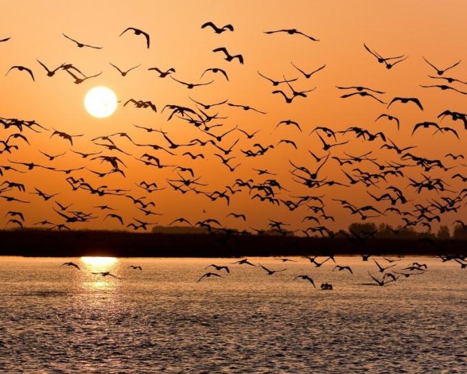 Почему Долина падающих птиц так называется