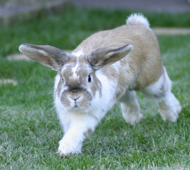Как снять шкуру с кролика