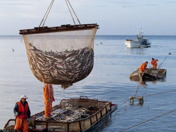 Промышленный лов рыбы