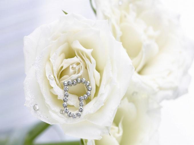 Белые розы - символ невинности, чистоты и целомудренности