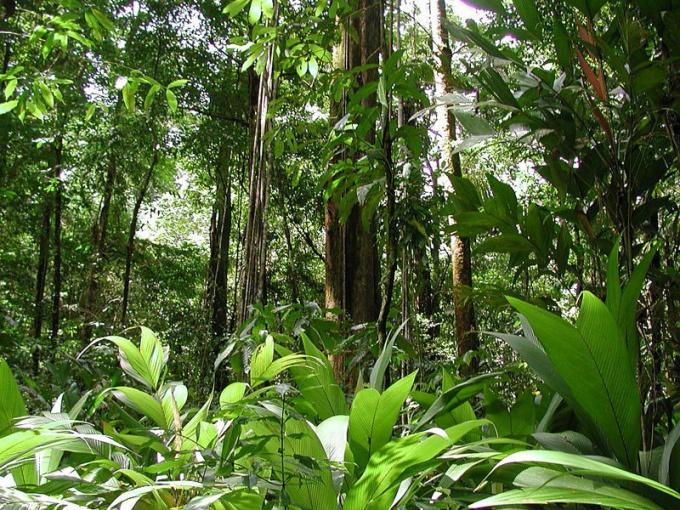Вечнозеленые леса Южной Америки - настоящий земной рай!