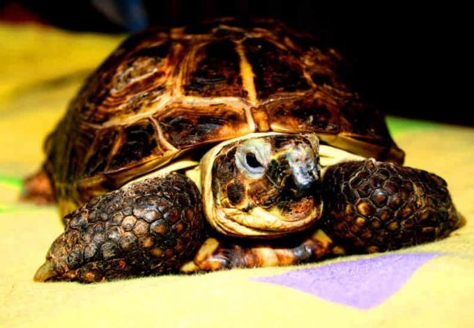 Как ухаживать за черепахой