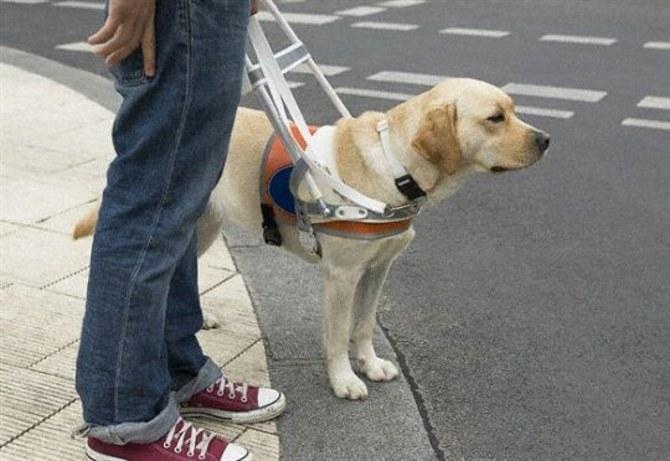 Как воспитать собаку-поводыря