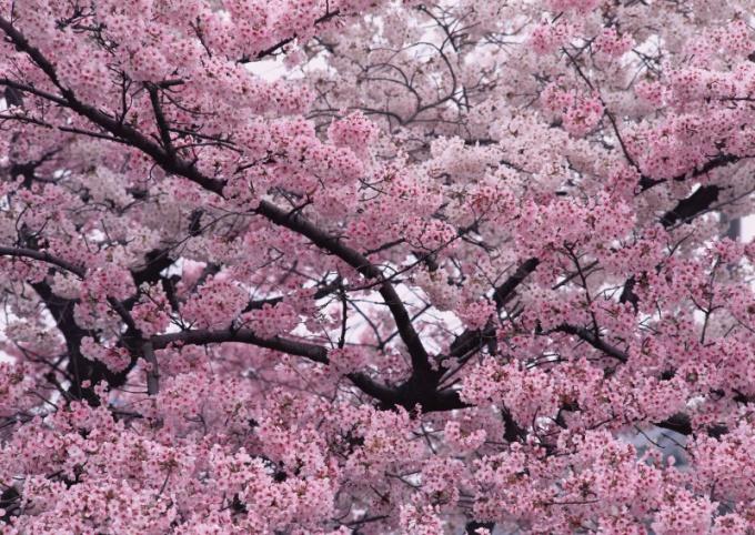Цветущие деревья во сне - это почти всегда хороший знак!