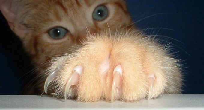 Кошачьи царапины далеко не безобидны, они могут вызвать серьезные проблемы с лимфатической системой