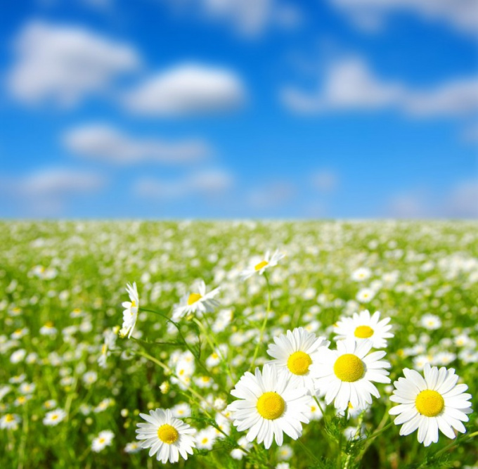 The use of baths of chamomile