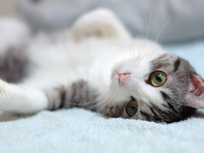 Колит - распространенное заболевание у кошек