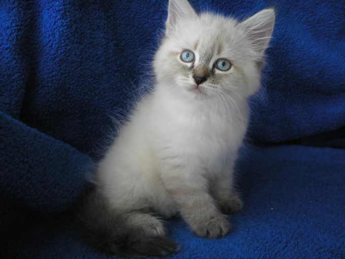 Искать новый дом для котенка нужно, когда он еще совсем маленький