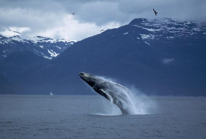 Китовые игры
