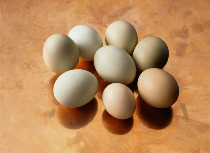 Why are chicken eggs different colors
