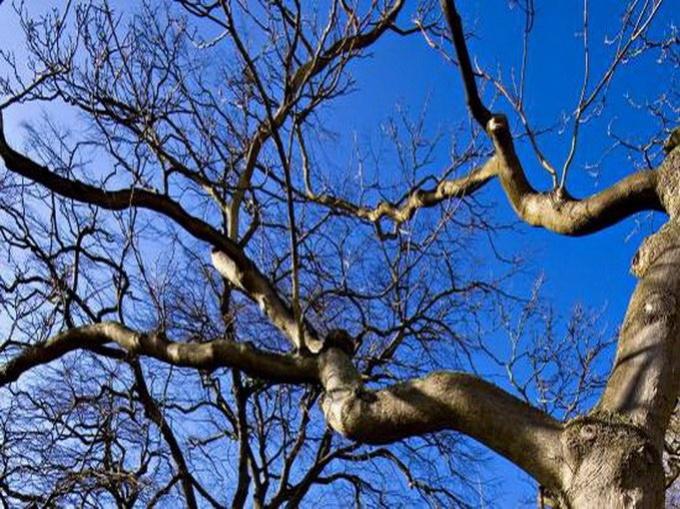 Даже если ветки дерева представляют явную угрозу, спилить их не так уж просто