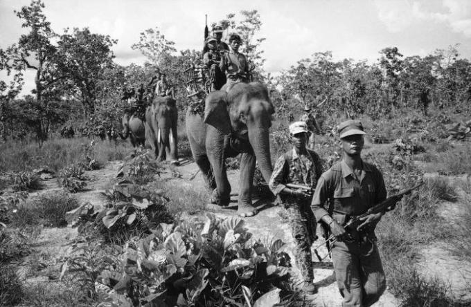 слоны на войне