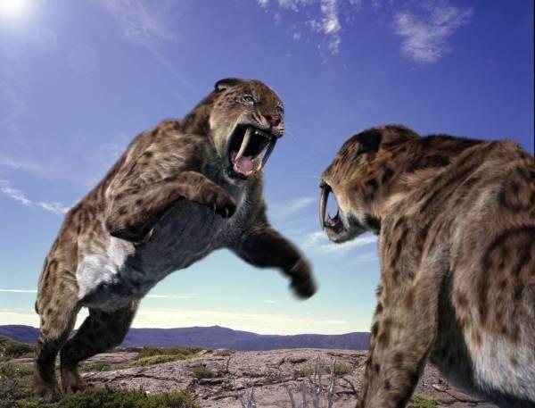 Ареал обитания саблезубых тигров