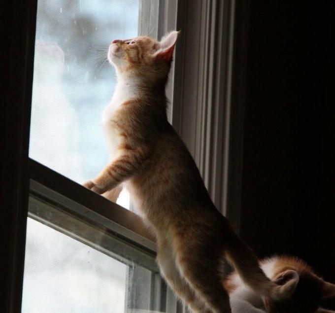 Шишка на спине у кота: что делать?