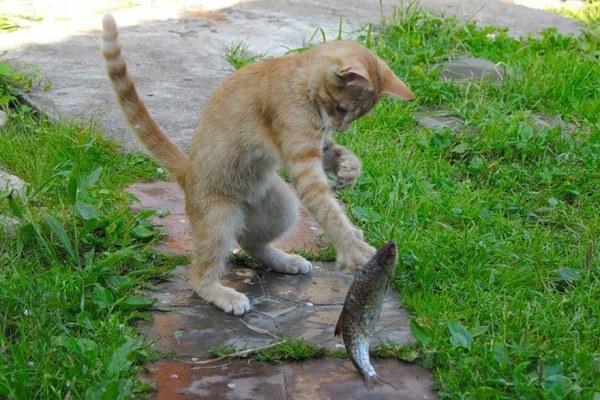 Рыбка - лакомство для кошек