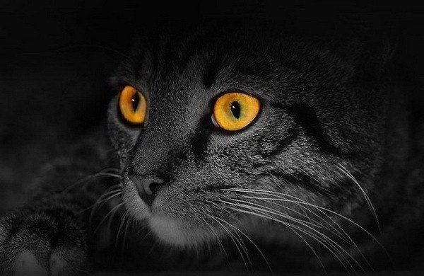 Чем кошачье зрение отличается от человеческого
