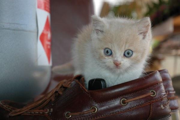 воспитать ласкового котенка