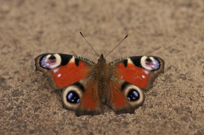 Рассмотрите узор на крыльях бабочки