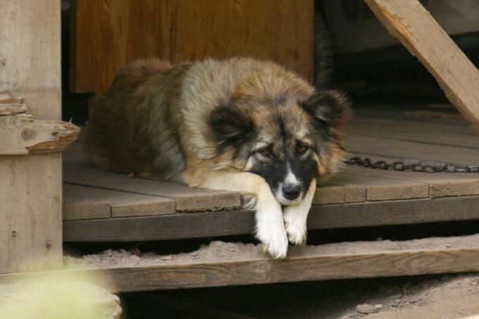 Животные склоны к депрессии