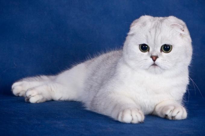 определить породу кота