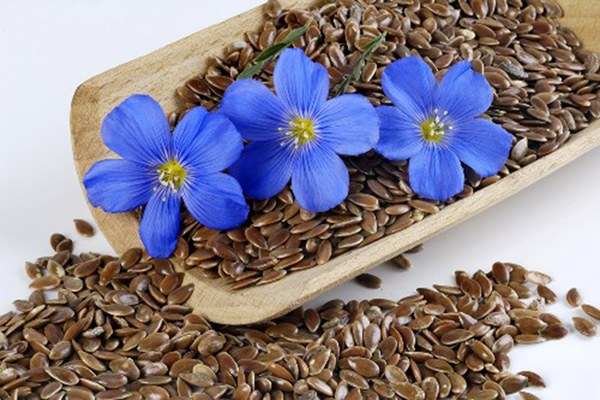 What helps a decoction of flax seed