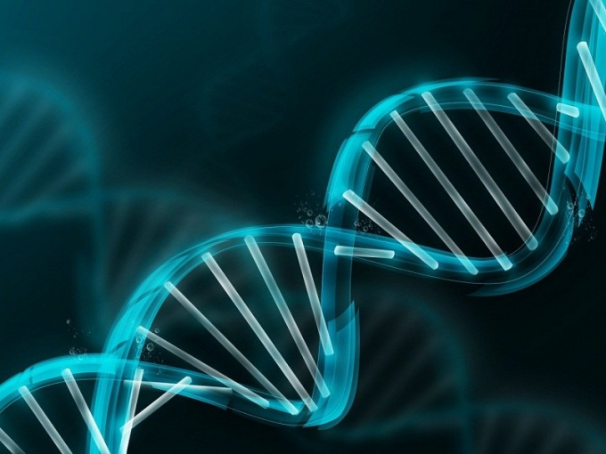 What is reduplication of DNA