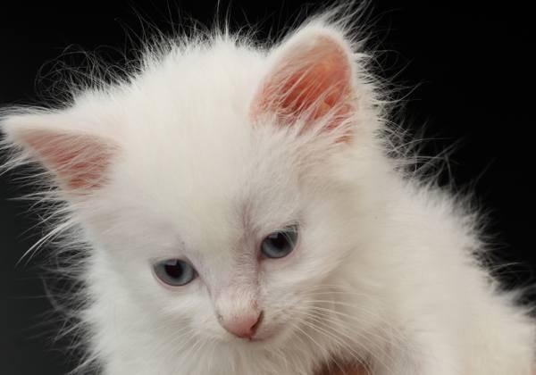Что делать, если котенок отравился