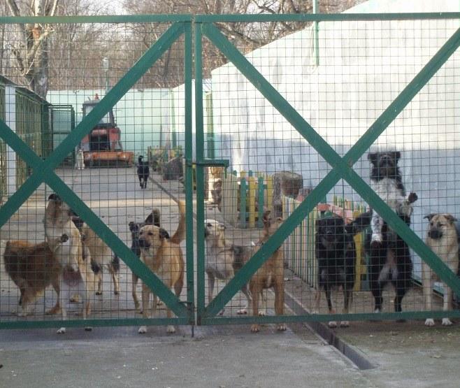 приюты для животных