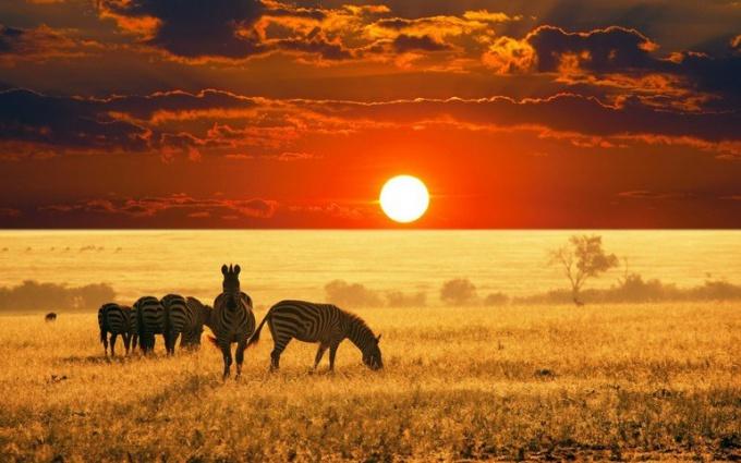 Африканский пейзаж