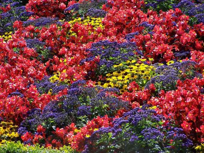 flowerbed continuous flowering