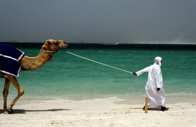 Как отправиться в путешествие в ОАЭ